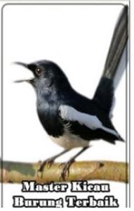 Aplikasi Kumpulan Suara Burung Terbaik